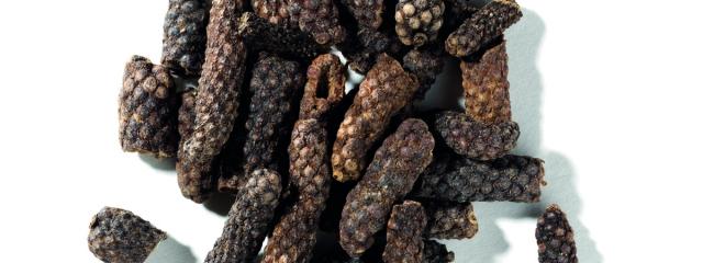 Indonesisk långpeppar – Herbaria